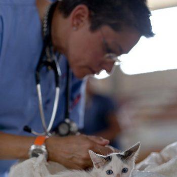 Ветеринарен център Сливен